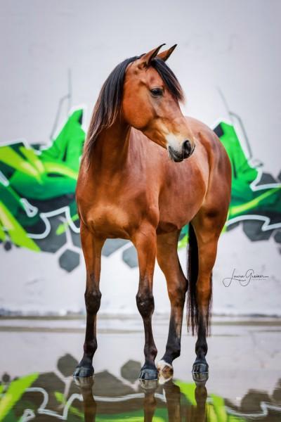 Graffiti-Pferd-Shooting-1