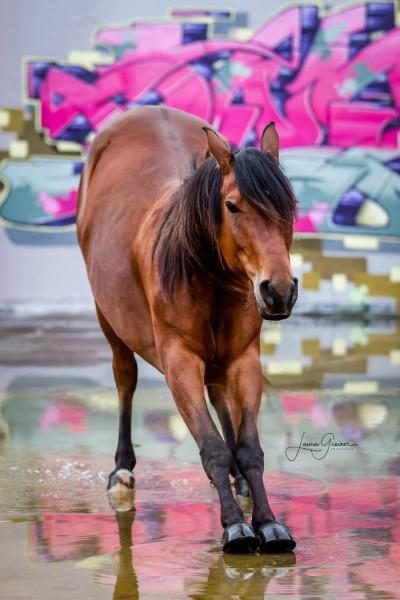 Graffiti-Pferd-Shooting-3