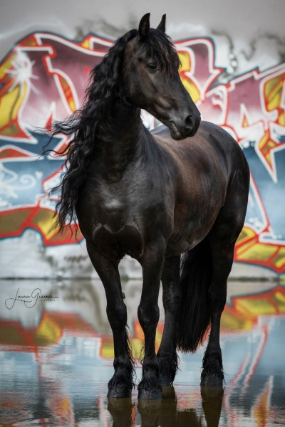 Graffiti-Pferd-Shooting-5