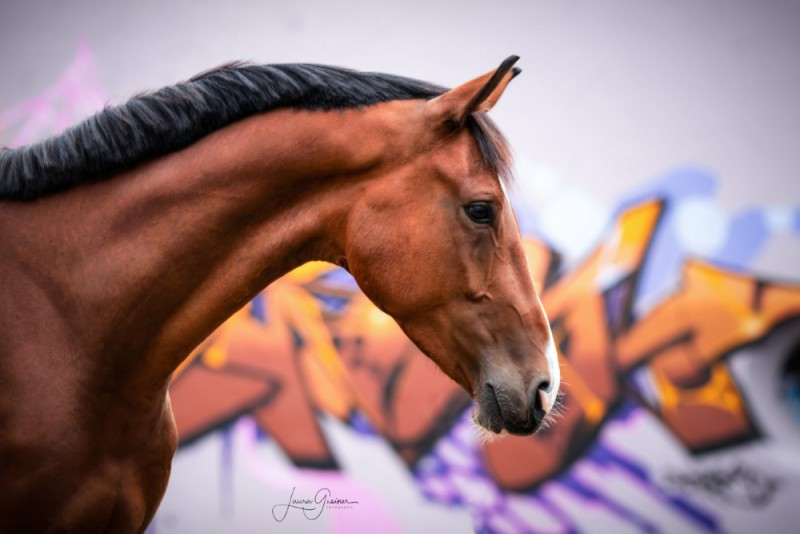 Graffiti-Pferd-Shooting-6