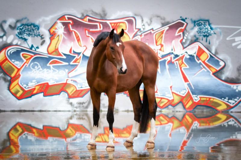 Graffiti-Pferd-Shooting-7