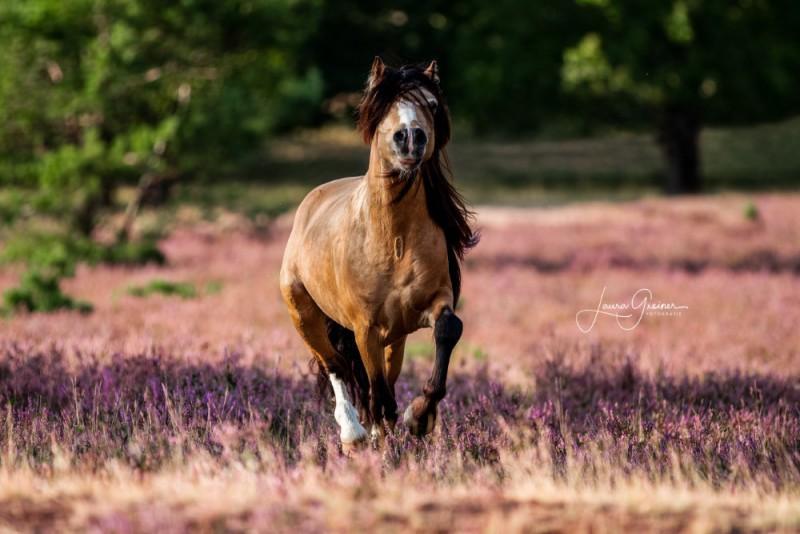 Heide-Shooting-Pferd-Hund-2