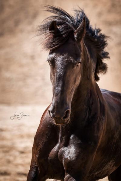 Aussergewoehnliche-Pferdeshootings-Tierfotografie-Norddeutschland-15