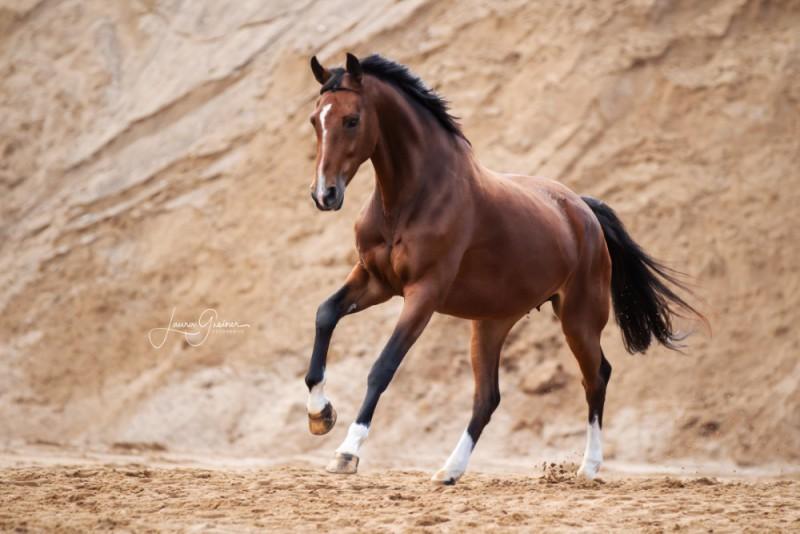 Aussergewoehnliche-Pferdeshootings-Tierfotografie-Norddeutschland-20