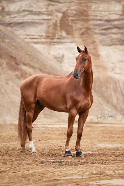 Aussergewoehnliche-Pferdeshootings-Tierfotografie-Norddeutschland-22