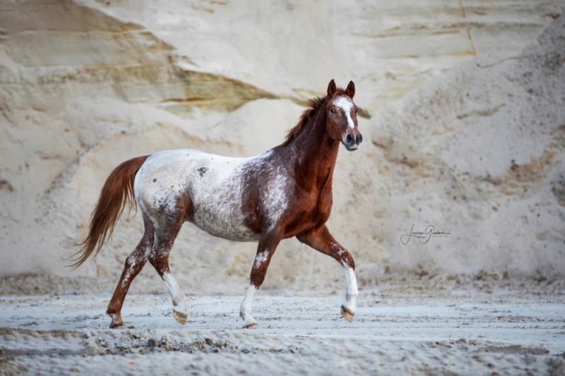 Aussergewoehnliche-Pferdeshootings-Tierfotografie-Norddeutschland-3