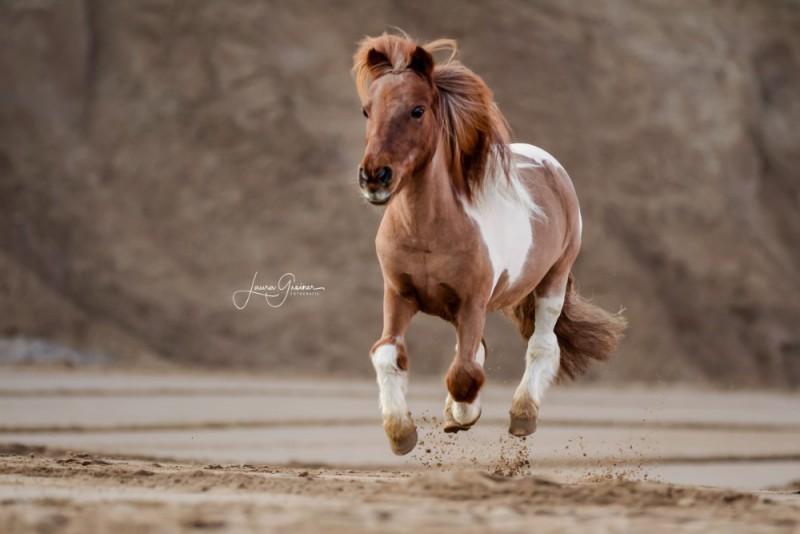 Aussergewoehnliche-Pferdeshootings-Tierfotografie-Norddeutschland-4