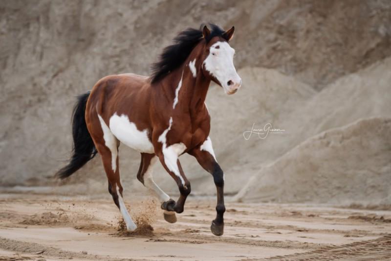 Aussergewoehnliche-Pferdeshootings-Tierfotografie-Norddeutschland-6