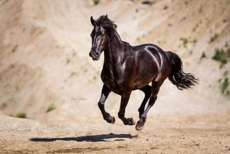 Aussergewoehnliche-Pferdeshootings-Tierfotografie-Norddeutschland-9