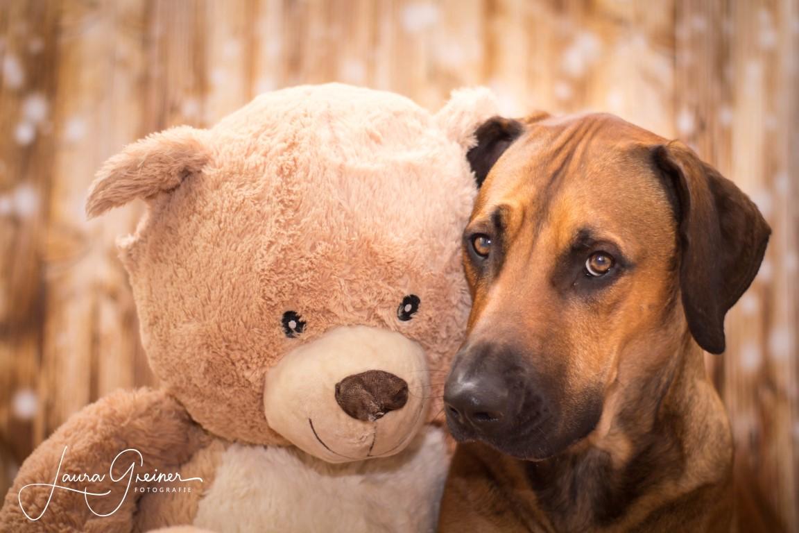 Hund mit Teddy