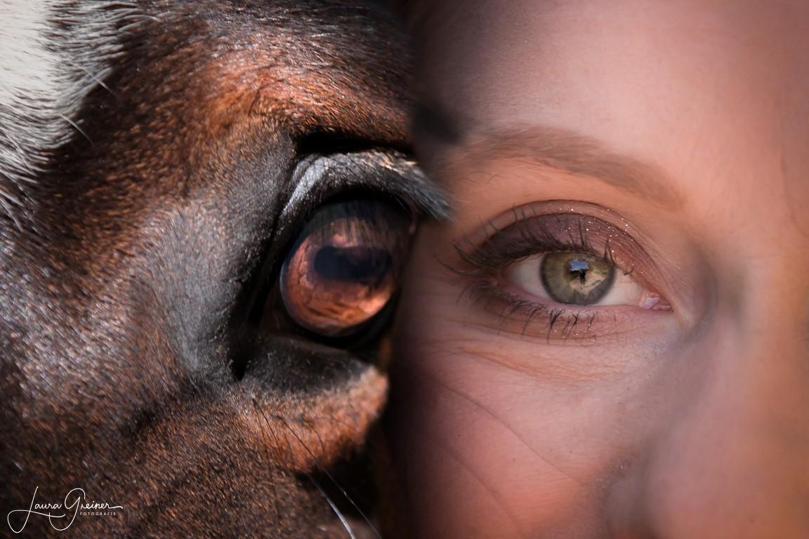 Pferdefotografie von Tierfotografie Norddeutschland (Laura Greiner)